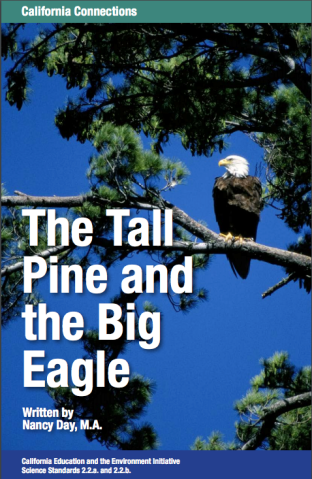 Tall pine and eagle