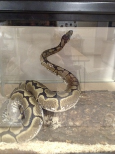 Jackie Lacey's Classroom Pet