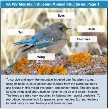 Visual Aid of Bird