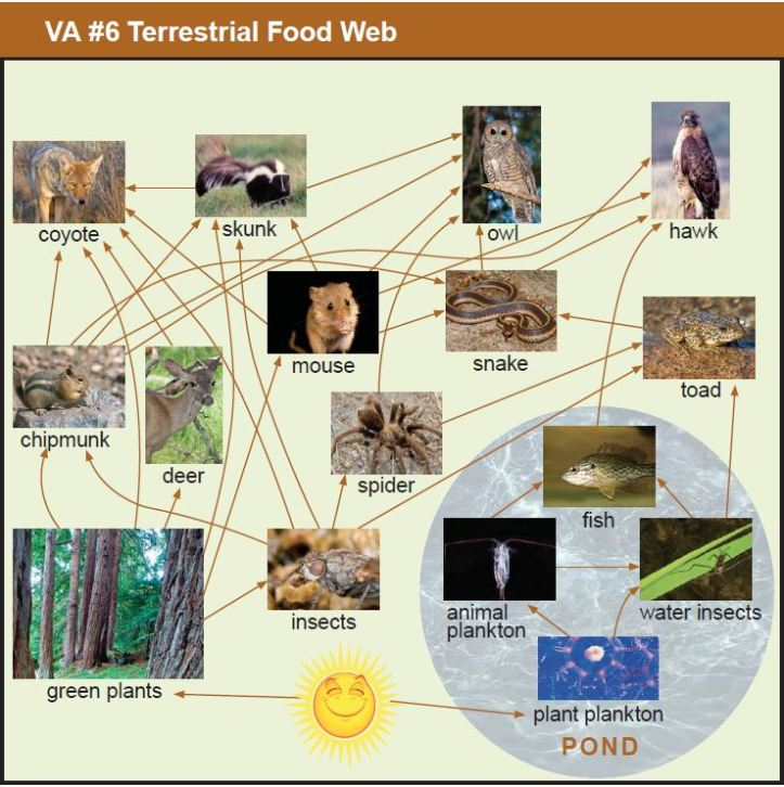 VA Food Web